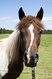 Horse. Portrait of a horse in a farm field Royalty Free Stock Images