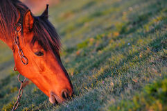 Horse. Eating grass on the yard Royalty Free Stock Images