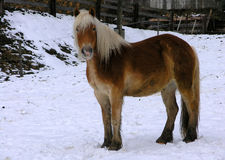 Horse. Photography of a horse, made at an austrian farm in the winter Stock Photo