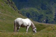 Horse Royalty Free Stock Photo