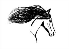 Horse. Vector illustration of horse. drawing, no trace Stock Photo