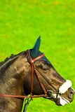 Horse. Beautiful horse jumping the barrier at the equestrian events stock photo