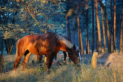Horse. In the forest Stock Photos