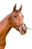 Horse. On the white background Royalty Free Stock Images