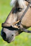 Horse. (Equus caballus) in the meadow Stock Photos
