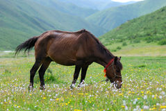 Horse. Is in full bloom in the fresh flower on the lawn plays horse Stock Photos