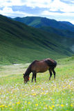 Horse. Is in full bloom in the fresh flower on the lawn plays horse Stock Image