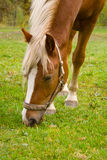 Horse. S are grazed on a meadow Stock Photos