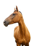 Horse. A horse on the white background Royalty Free Stock Photos