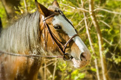 Horse. Portrait against blurred background stock photography