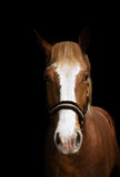 Horse. A horse on the black background Royalty Free Stock Image