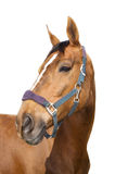 Horse. A horse on the white background Stock Photo