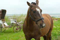Horse. On a background of the old carriage and field Royalty Free Stock Images