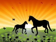 Horse. Is with foal to fall on meadow on background rising sun Stock Photos