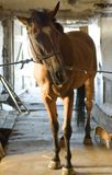 Horse. Brown horse on a stable Stock Image