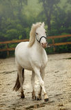 HORSE. Beautiful white horse head portrait Stock Photo