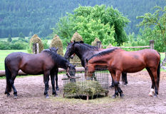 Free Horse Stock Images - 14830944