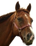 Horse. Head isolated on white background