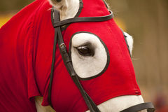 Horse. Head of a horse from the medieval time by the  style Royalty Free Stock Image