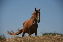 Horse. Wild horse in a blue sky Royalty Free Stock Image