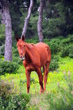 Horse. A beautiful brown horse on grass Stock Photo