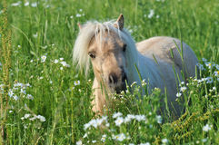 Horse. A horse eat in a field Stock Images