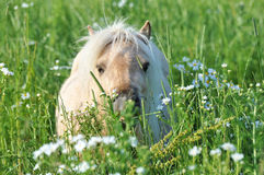 Horse. A horse eat in a field Royalty Free Stock Photos