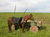 Horse. Ancient Agriculture Stock Photos