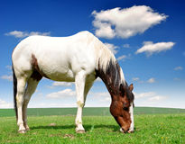 Horse. In the spring meadow Stock Image