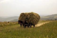 Horse. S wagon from Transilvania , Romania Royalty Free Stock Photo