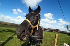 Horse. Wide angle shot of a horse with tilted horizon royalty free stock images