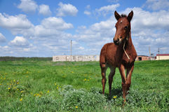 Horse. Grazing in a green field Stock Photo