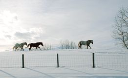 Horse. Ona hill standing, winter background Royalty Free Stock Images