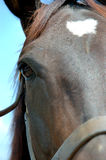Horse. A 3/4 headshot of a horse's face royalty free stock images