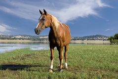 Horse 2. Serene view of an horse next to a lagoon stock photo