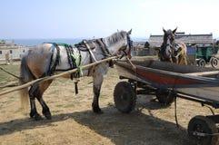 Horse. Royalty Free Stock Photo