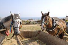 Horse. Royalty Free Stock Image