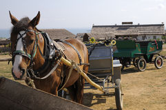 Free Horse. Stock Photo - 20552830