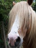 Horse. Lovely looking horse with a long hair royalty free stock photos