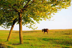 Horse. An alone horse in Pasture Stock Photo