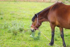 Horse. A brown melancholy beautiful horse Stock Photo
