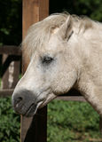 Horse. White horse profile of head stock photography
