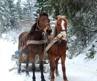 Free Horse Stock Photo - 21585850