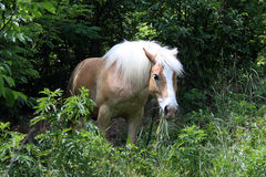 Horse. Brown horse in a pasture in the woods Stock Images