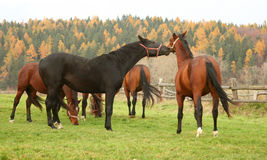 Horse 22 Stock Photos