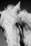 Horse. An image of a horse on a farm stock images