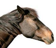 Horse. Isolated on white background Stock Images