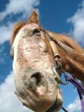 Horse. With blue sky Royalty Free Stock Images