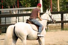 Horse. A girl riding a horse Stock Image