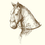 Horse. Wild horse - hand drawn collection Royalty Free Stock Photography
